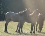 Från vänster: Smokey Wolf, Vargfura, Balthzer. Juni 2013