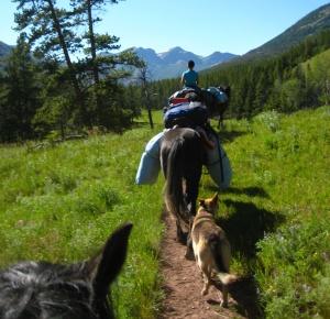 Långritt i Montana på Nokotahingstar