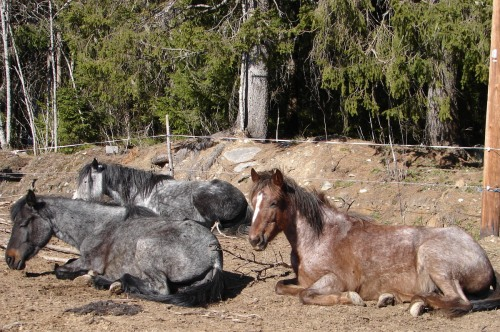 Napoleona, Skata and Nacona enjoy the sun