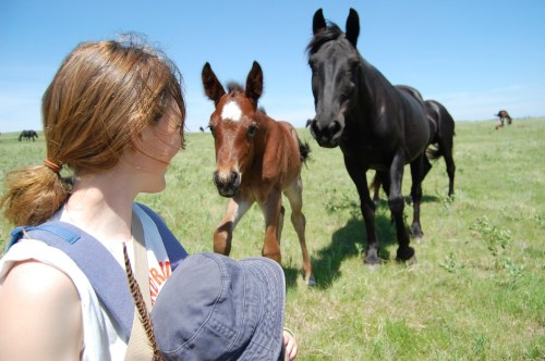 One can never get enough of touring pastures and visiting horses!