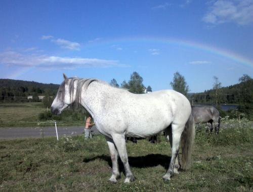 A rainbow over Eyrie on a sunny day must be a good sign of her being with us.