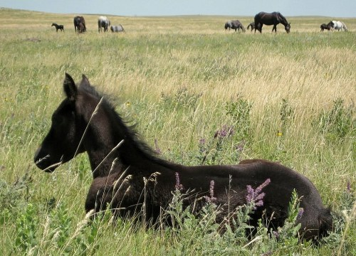 A very young Leona on the prairie.