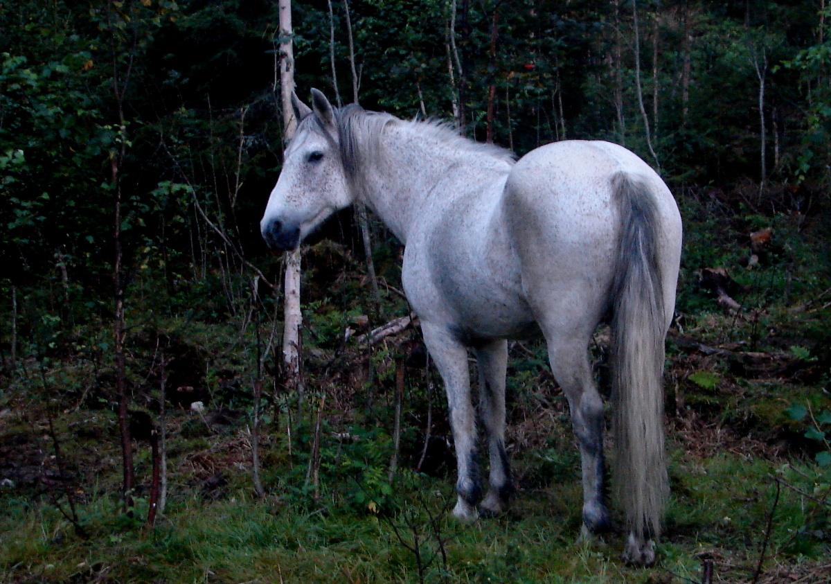 Popular Wallpaper Horse Fairy - dsc04555  Photograph_2110078.jpg